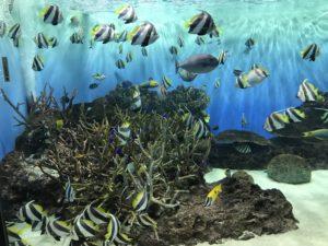 新潟水族館 写真