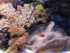 新潟 水族館 写真