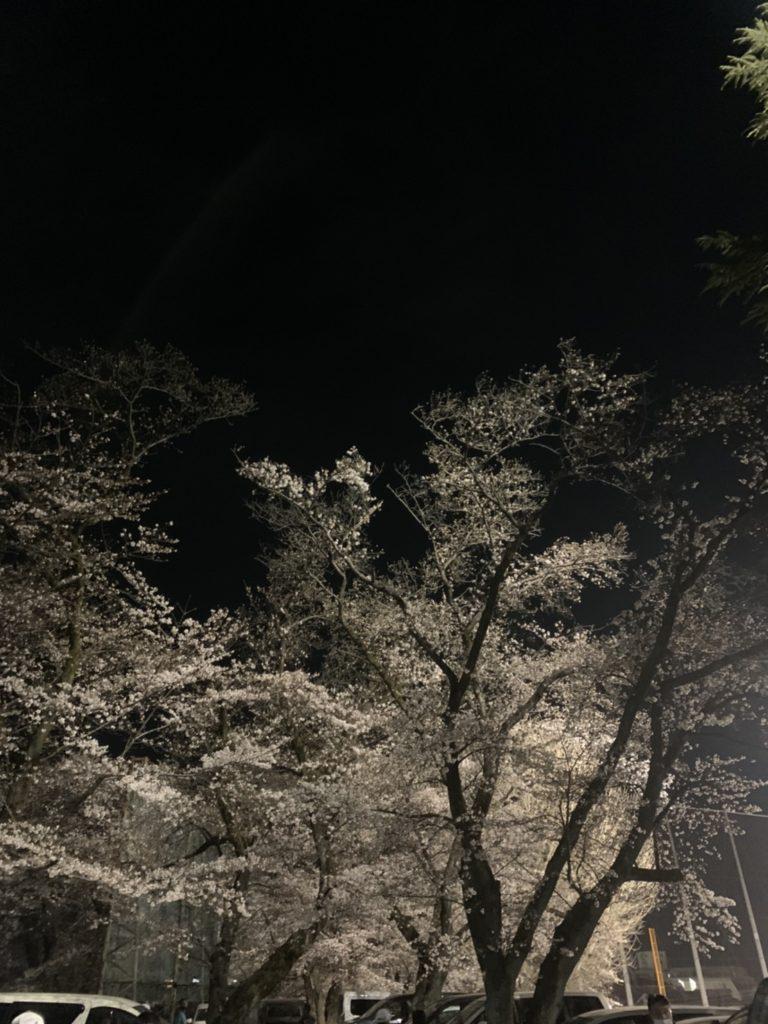 夜桜 福生