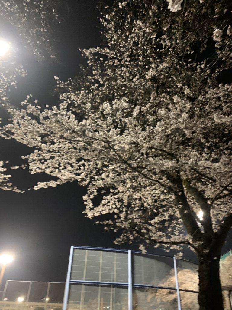 福生 夜桜