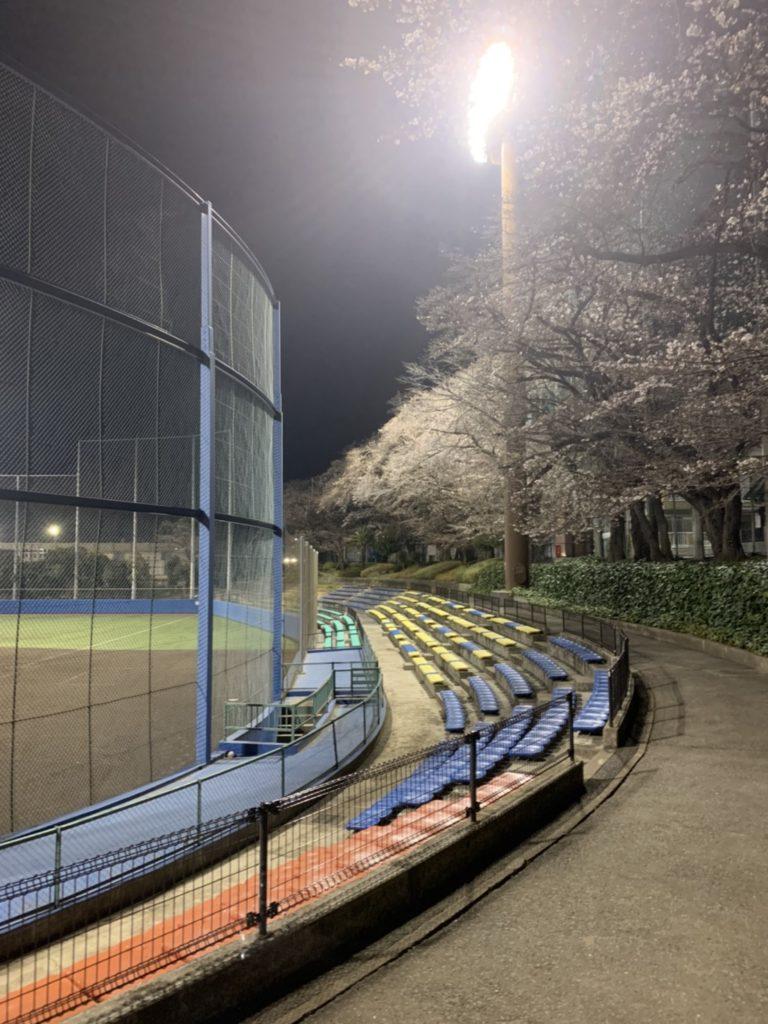福生球場 桜